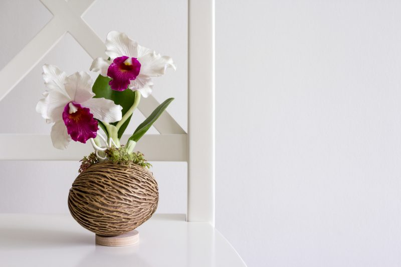 Cattleya orchid on white chair